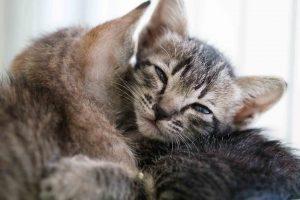 ลูกแมวยังเล็กมากต้องการความอบอุ่น