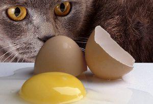 อาหารต้องห้ามสำหรับแมว