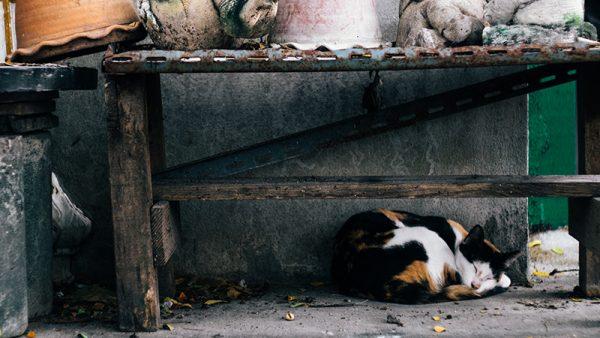 ไข้หวัดแมวมักมาพร้อมกับอากาศเปลี่ยนแปลง