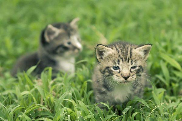 เห็บหมัดแมวสามารถซ่อนตัวในสวนหลังบ้านคุณได้นะ